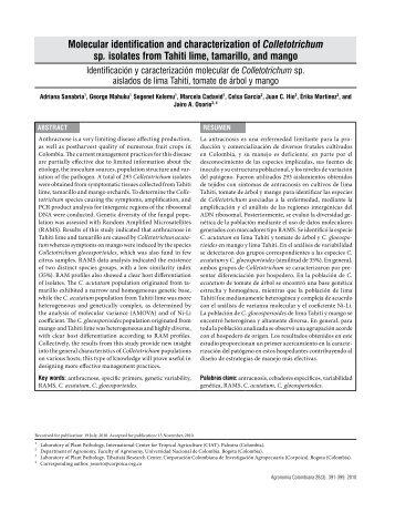 Molecular identification and characterization of Colletotrichum sp ...