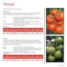 Tomate e Pimentão 2018 | 2019 - Page 3