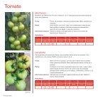 Tomate e Pimentão 2018 | 2019 - Page 4