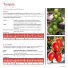 Tomate e Pimentão 2018 | 2019 - Page 7