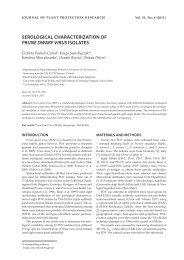 serological characterization of prune dwarf virus isolates
