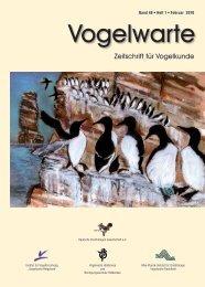 (Falco tinnunculus) und Schleiereule (Tyto alba) - DO-G
