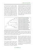 Identification of the grass family (Poaceae) by using the plant dna barcodes rbcl and matK - Page 7