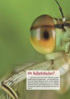 """KidsPower """"Insekten"""" 2/2014 - Seite 4"""