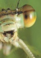"""KidsPower """"Insekten"""" 2/2014 - Seite 5"""