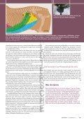 FOP1 11 Schulte Wien WZ - Page 5