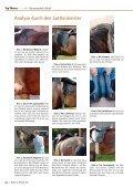 Passt der Sattel? - Deutsches Institut für Pferdeosteopathie - Page 3