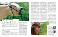 Artikel hier lesen. - Pferd in Balance