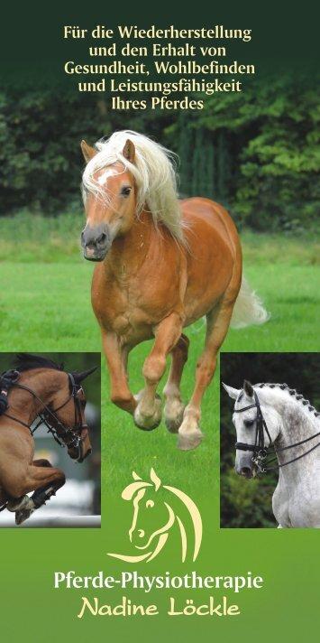 Pferde-Physiotherapie