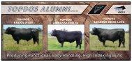 Topbos_Bull Sale Flyer