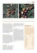 suteria, cHocolatier in solotHurn - Pistor - Seite 5