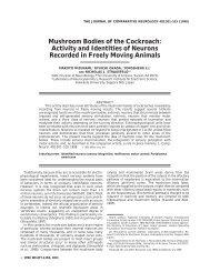 Mushroom Bodies of the Cockroach - Institut für Biologie und ...