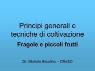 Fragole e piccoli frutti - Comune di Cuneo