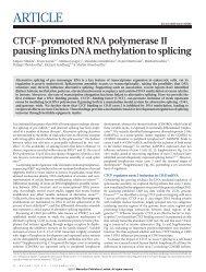 CTCF-promoted RNA polymerase II pausing links DNA methylation ...