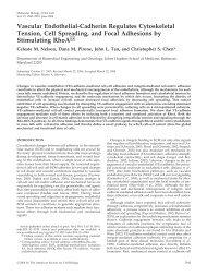 Vascular Endothelial-Cadherin Regulates Cytoskeletal Tension, Cell