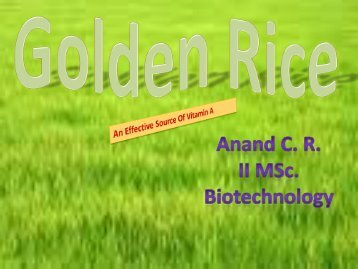 Golden Rice - Plant