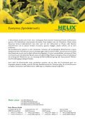 Euonymus (Spindelstrauch) - Bodendecker - Seite 2
