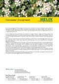 Cotoneaster (Zwergmispel) - Bodendecker - Seite 2