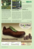Fahrplan für Bodendecker erarbeitet - Helix Pflanzen - Seite 2