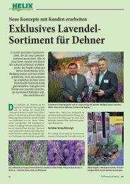 Exklusives Lavendel- Sortiment für Dehner - Helix Pflanzen