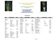 Convention Foliage Solutions, LLC Event Plant Rental - Bravo!