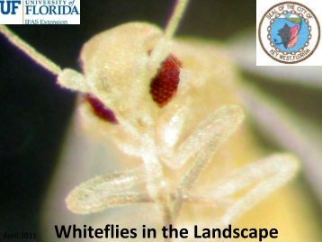 Whiteflies in the Landscape - Monroe County Extension Service ...