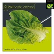 Greenhouse Lettuce 2018 UK