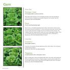 Greenhouse Lettuce 2018 UK - Page 6