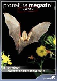 Heimliche Heldinnen der Nacht - Pro Natura