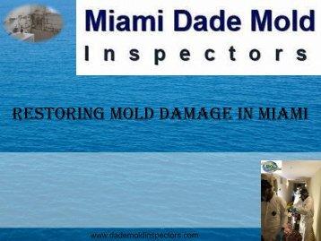 Restoring Mold Damage in Miami