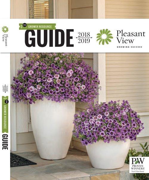 Veronica Spicata /'Snow Candles/' Perennial Garden Flowering Plug Plants Pack x6