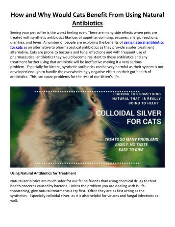 How and Why Would Cats Benefit From Using Natural Antibiotics