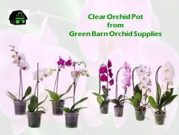 Shop Clear Orchid Pot Only on Greenbarnorchid.com