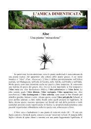 Aloe - Una pianta miracolosa - atuttoportale