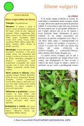 Silene vulgaris - Piante spontanee in cucina