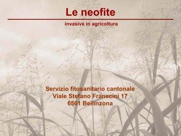 Reynoutria japonica - WSL