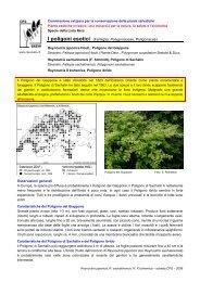 I poligoni esotici (Famiglia: Polygonaceae, Poligonacee)