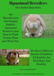 Mpanimal Breeders The Rabbit Exporters.