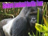 Eastern Lowland Gorilla Tour