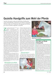 Gezielte Handgriffe zum Wohl der Pferde - Deutsches Institut für ...