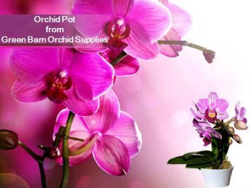 Buy Orchid Pot at Very Low Cost