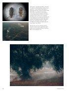 132_b1_06_18_Olivenbaeume - Page 4