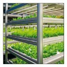 Leaflet Vertical Farming 2018 Chinese version - Page 2