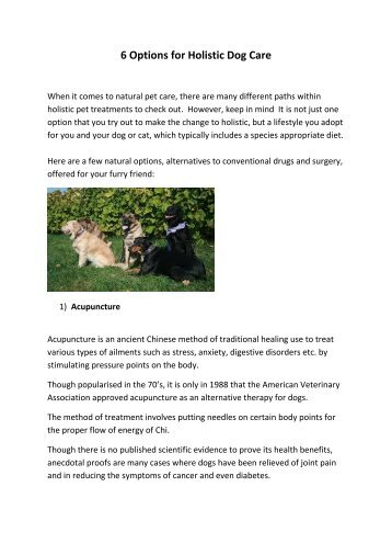 Article 1 6 Options for Holistic Dog Care