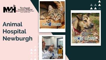 Trustable Animal Veterinarian in Newburgh