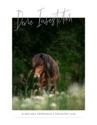 Preisliste 2018 Pferdefotografie