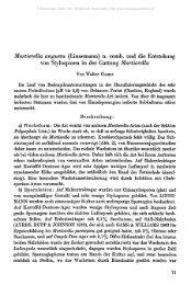 Mortierella angusta (Linnemann) n. comb, und die Entstehung von ...