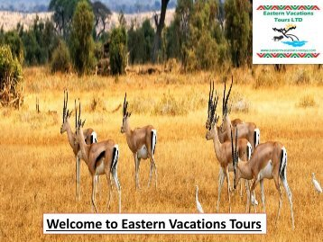 Welcome to Eastern Vacations Tours