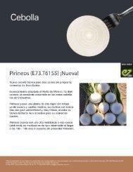 Pirineos - Enza Zaden-34