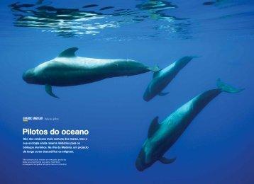Pilotos do oceano - Museu da Baleia da Madeira